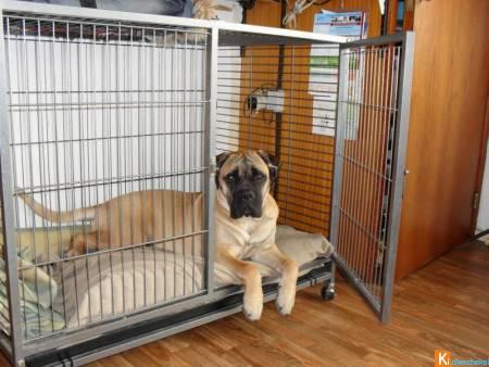 cage-chien-mobile-enclos-chien-parc-chat-neuf-2-1_450x338z10