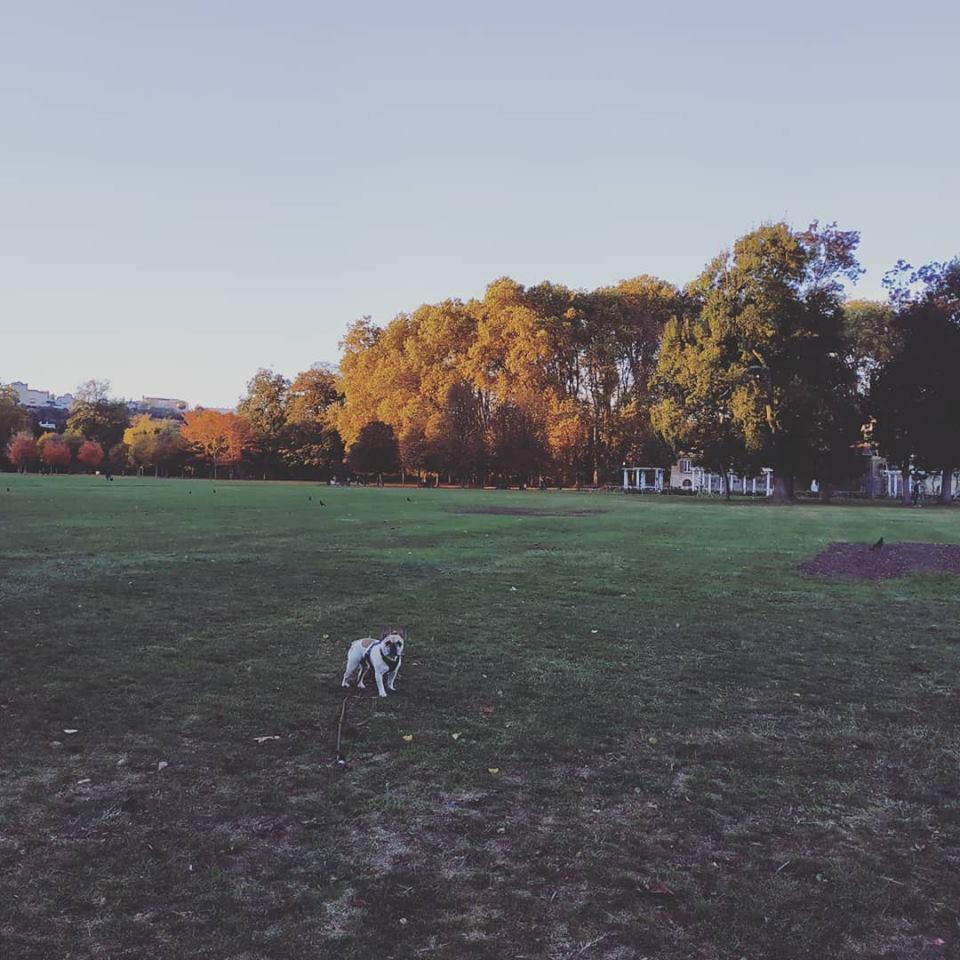 eliott parc.jpg
